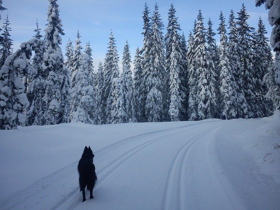 skitur2-feb12.jpg